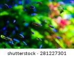 Tropical Colorful Sea Fish