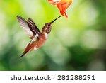 allen  hummingbird | Shutterstock . vector #281288291