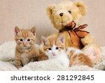 cute kittens | Shutterstock . vector #281292845