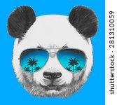 hand drawn portrait of panda... | Shutterstock .eps vector #281310059