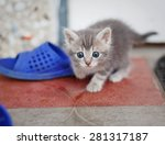 Stock photo funny gray brown kitten playing 281317187