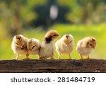 sleepy babies chicken on nature ... | Shutterstock . vector #281484719