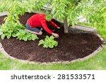 male gardener working in the... | Shutterstock . vector #281533571