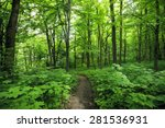Beautiful Morning Green Forest