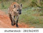 spotted hyena running   Shutterstock . vector #281562455