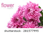 purple or pink chrysanthemum... | Shutterstock . vector #281577995