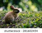Rabbit  Bunny In The Woods