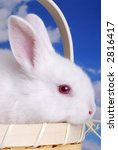 close up of cute easter bunny... | Shutterstock . vector #2816417