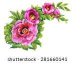 blooming pink rose flowers ... | Shutterstock . vector #281660141