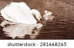 Beautiful Mute Swan With Her 3...