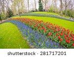 Wonderful Tulips Field Of...
