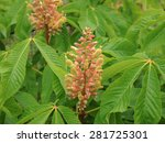 Small photo of Aesculus Pavia in the Arboretum at Rosemoor in Devon, England, UK