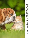 Stock photo english bulldog puppy with a little kitten 281764661