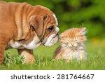 Stock photo english bulldog puppy with a little kitten 281764667