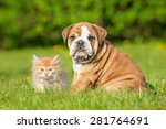 Stock photo english bulldog puppy with a little kitten 281764691