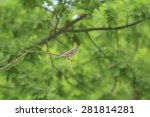 single sparrow sits on a branch ... | Shutterstock . vector #281814281
