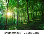 Beautiful Green Forest With...