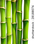 Bamboo Isolated 326