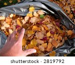 filling a bag of leaves during... | Shutterstock . vector #2819792