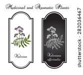 valerian. medicinal herb   Shutterstock .eps vector #282036467