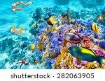 wonderful and beautiful... | Shutterstock . vector #282063905