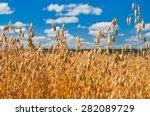field of oats in front of a... | Shutterstock . vector #282089729