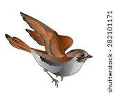 little bird cub sparrow  passer ... | Shutterstock .eps vector #282101171