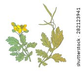 a medicinal plant   celandine... | Shutterstock .eps vector #282123941