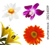 four tropical flowers isolated... | Shutterstock . vector #28216039