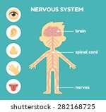Nervous System  Educational...