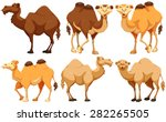 different type of camels... | Shutterstock .eps vector #282265505