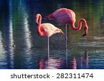 Two Pink Flamingos Standing In...