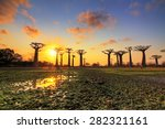 beautiful baobab trees at... | Shutterstock . vector #282321161