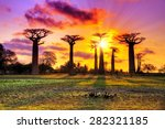 beautiful baobab trees at... | Shutterstock . vector #282321185