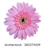 flower isolated clipping path ... | Shutterstock . vector #282374339