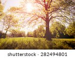 Solitary Tree On A Meadow In...