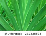 green leaves as background....   Shutterstock . vector #282535535