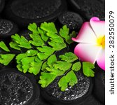 Small photo of spa concept of plumeria flower, green branch Adiantum fern with drops on zen basalt stones in water, closeup