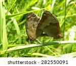 Meadow Brown Butterflies ...