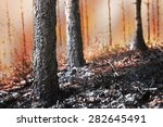 Forest On Fire  With Scorched...