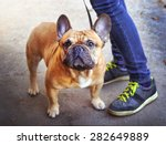 Stock photo strong and healthy young french bulldog mail with the master walk in the park 282649889