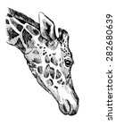 hand painted giraffe's head in... | Shutterstock .eps vector #282680639