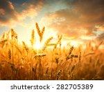 Wheat Field Against Golden...