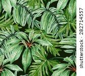 Tropical Leaves  Dense Jungle....