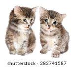 pair of cute fluffy kittens. ... | Shutterstock . vector #282741587