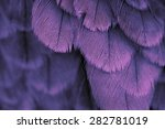 Plumage Background Of Bird...