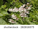 Flowers And Foliage Of Souther...