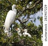 Great White Egret Heron Crane...