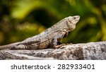 mexican iguana resting on a... | Shutterstock . vector #282933401