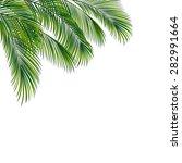 palm tree foliage isolated on... | Shutterstock .eps vector #282991664